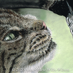 Anne-Marie Wills-Wilson: Animal Portraits